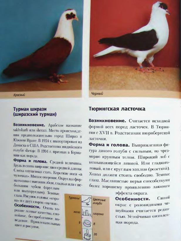 Породы голубей - Страница 2 Image291