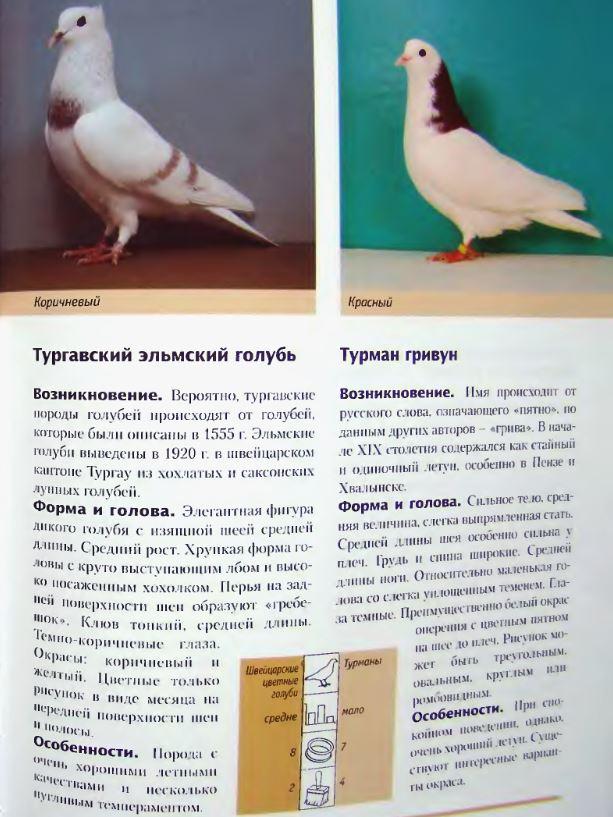 Каталог пород голубей с фотографиями