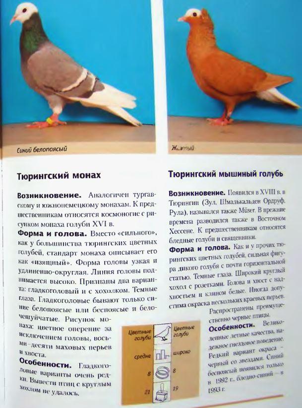 Породы голубей - Страница 2 Image296