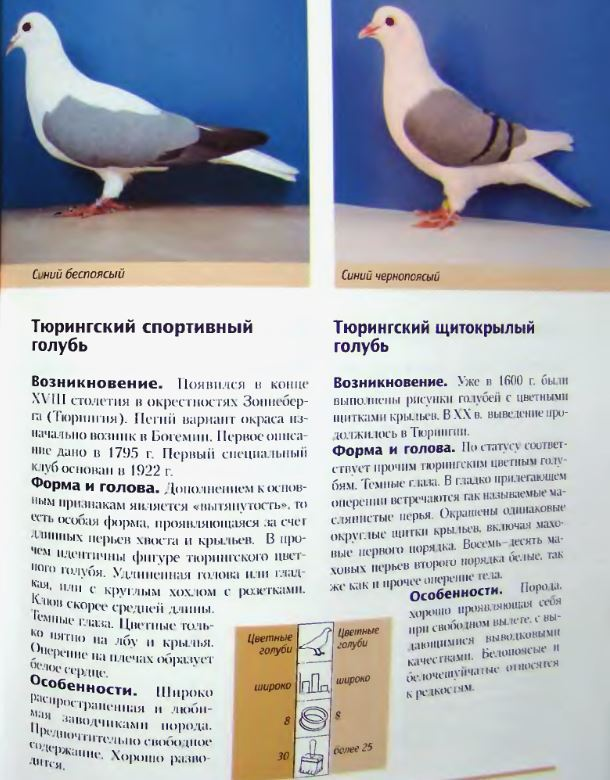 Породы голубей - Страница 2 Image297