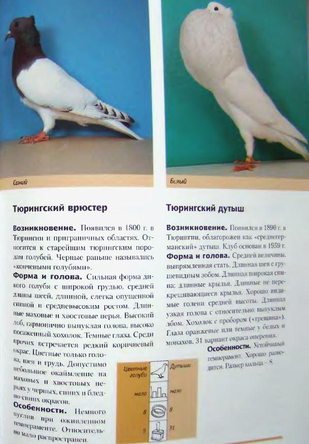 Породы голубей - Страница 2 Image298