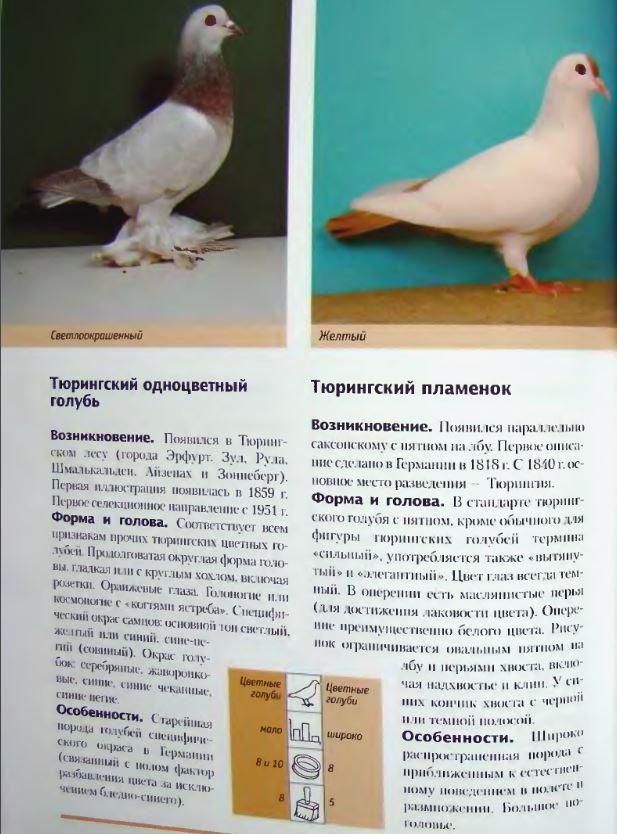 Породы голубей - Страница 2 Image299