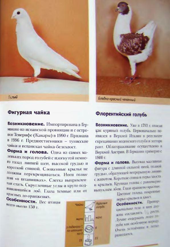 Породы голубей - Страница 2 Image301