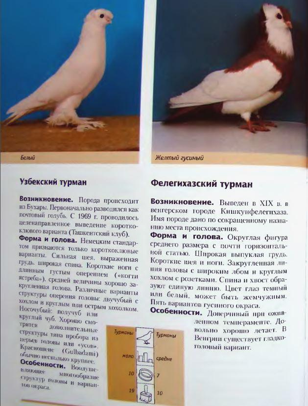 Породы голубей - Страница 2 Image302
