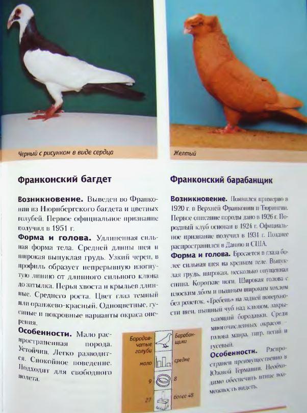 Породы голубей - Страница 2 Image303