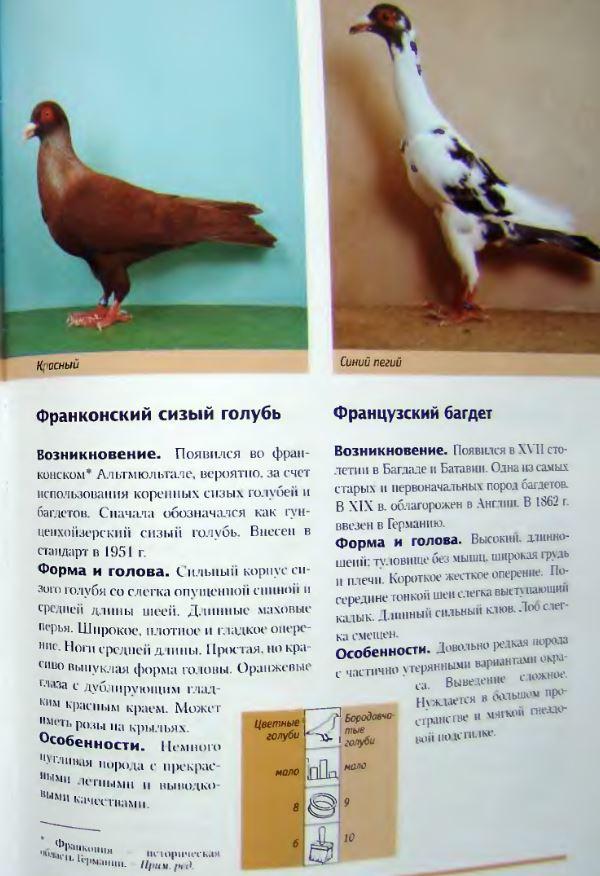 Породы голубей - Страница 2 Image304