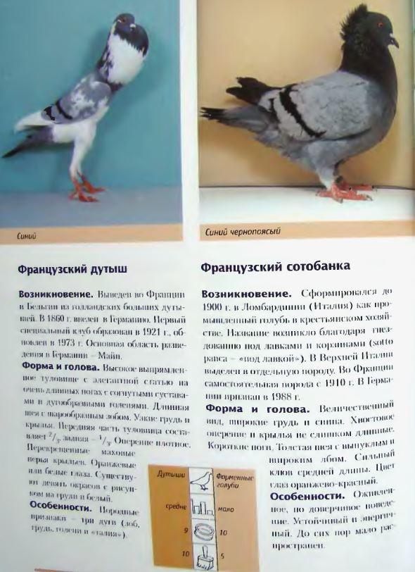 Породы голубей - Страница 2 Image305