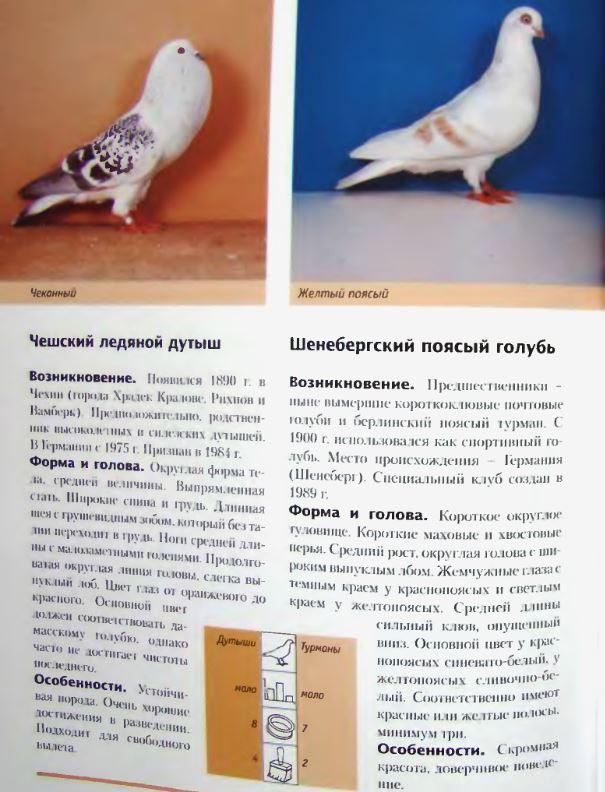 Породы голубей - Страница 2 Image306