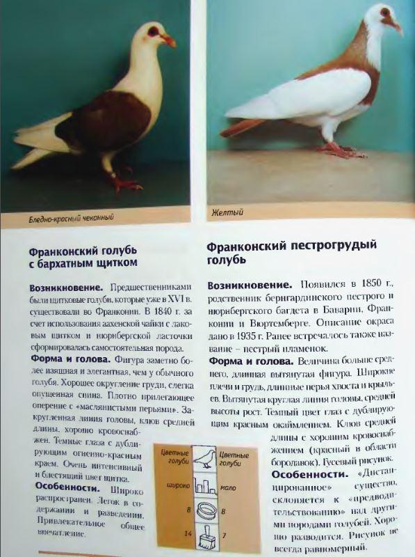 Породы голубей - Страница 2 Image307