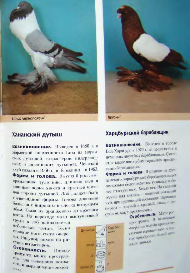 Породы голубей - Страница 2 Image308
