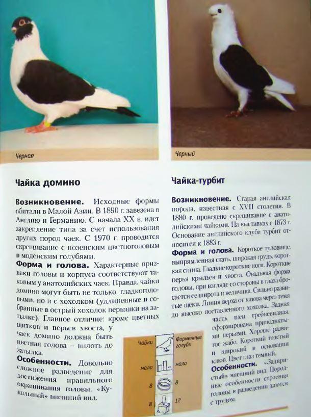 Породы голубей - Страница 2 Image312