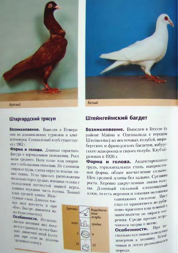 Породы голубей - Страница 2 Image313