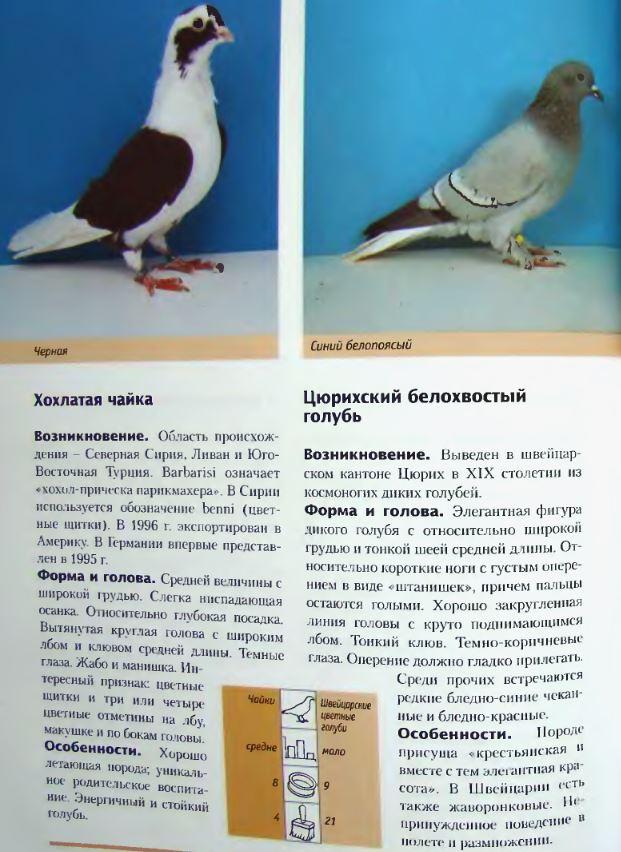 Породы голубей - Страница 2 Image314