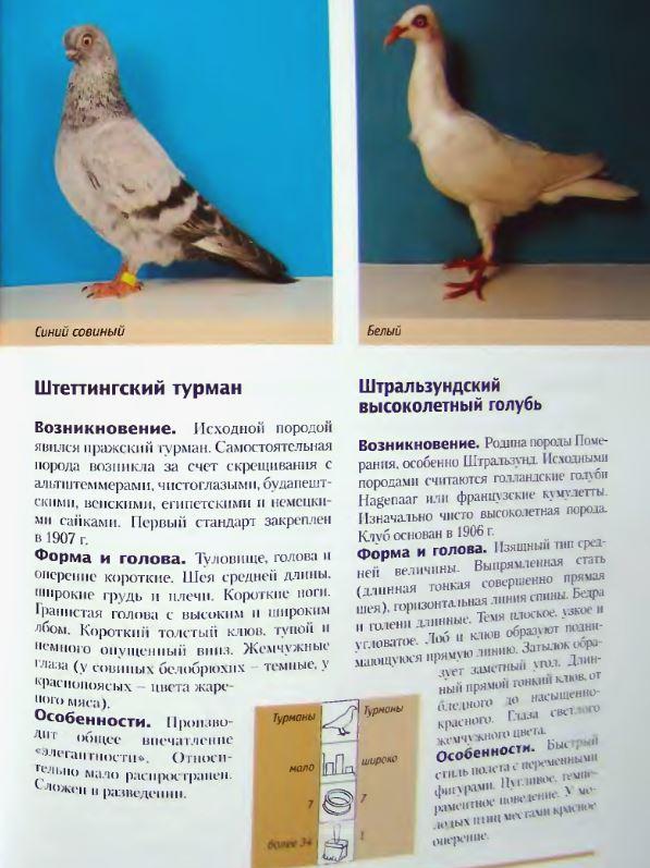 Породы голубей - Страница 2 Image315