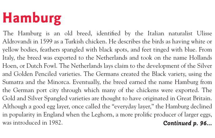 Гамбургские куры - Страница 2 Image339