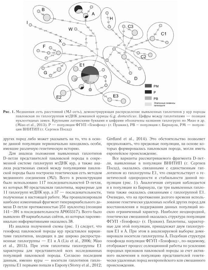 Павловская порода кур - Страница 19 Image479