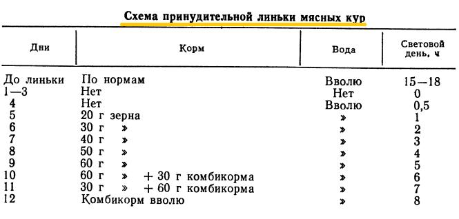 Советы новичку о курочках! - Страница 5 Image_59