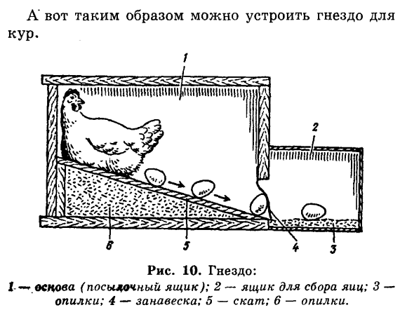Советы новичку о курочках! - Страница 5 Image_77