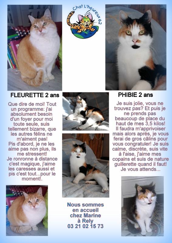 PHIBIE, née en juin 2015 Marine10