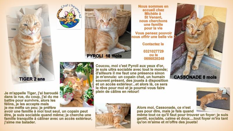 66) PYROLI, né en mai 2016 - Page 2 Michyl10