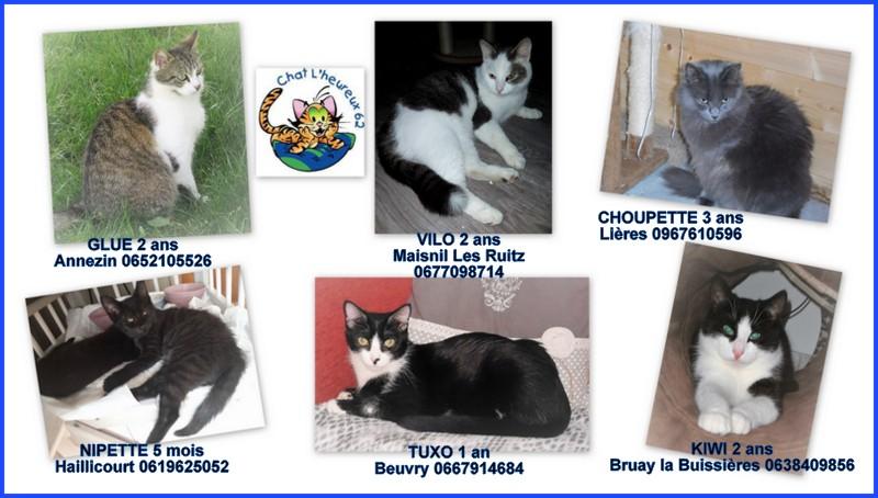 Tuxo chat noir et blanc né en septembre 2016 Vilo212