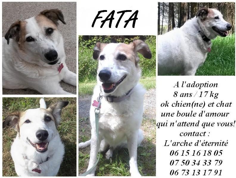 FATA, née le 12/06/2009, arrivée chiot au refuge (soeur de Mickey et fille de Tara) - en FA dans le 49 - GARANT - SOS -R-FB-SC-30MA - Page 11 Fata_m10