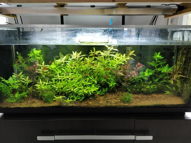 Probleme d'algues pour changer - Page 2 Img_2011