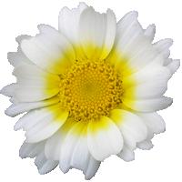 [Semaine de la Nature] À chacun sa fleur ! ♥ Fleur610