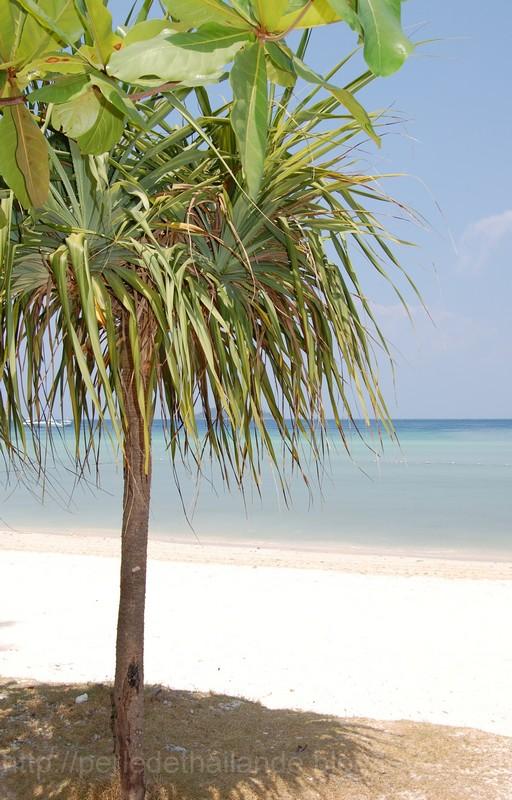 Phuket et le sud de la Thailande Dsc_0528