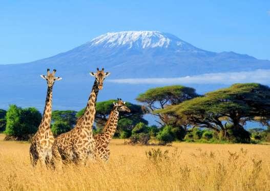 Les 20 plus beaux volcans du monde  123