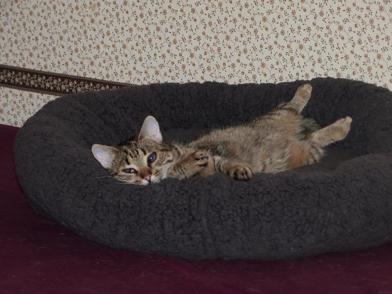 SHANA - chat femelle aveugle, née en fin 2016 - EN FA A PASCANI - Adoptée par Nanette 71 (71) - Page 2 P1040412