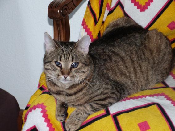SHANA - chat femelle aveugle, née en fin 2016 - EN FA A PASCANI - Adoptée par Nanette 71 (71) - Page 2 P1040413