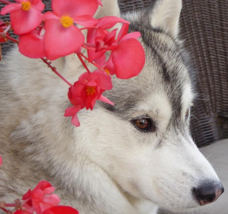 """Mishka's (Kohdi's lil """"sister"""") scrapbook - Page 2 Image105"""