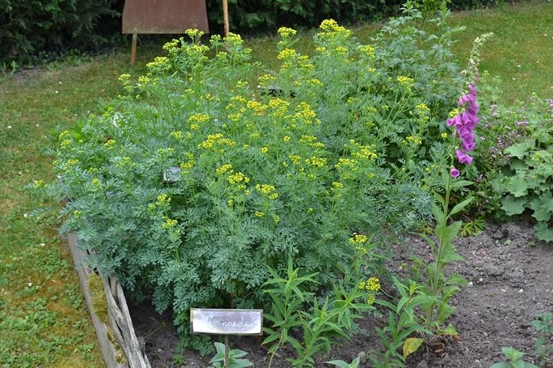 Les plantes toxiques. 024_8016