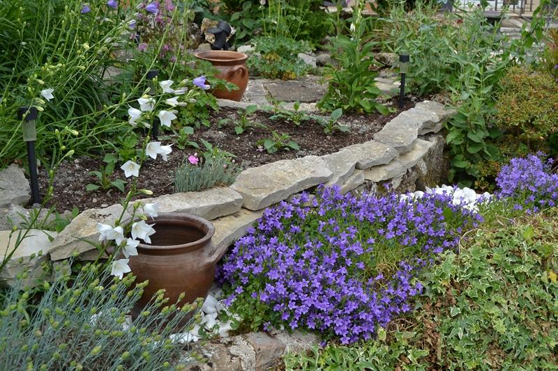 Un petit tour d'horizon de notre jardin...... 029_8017