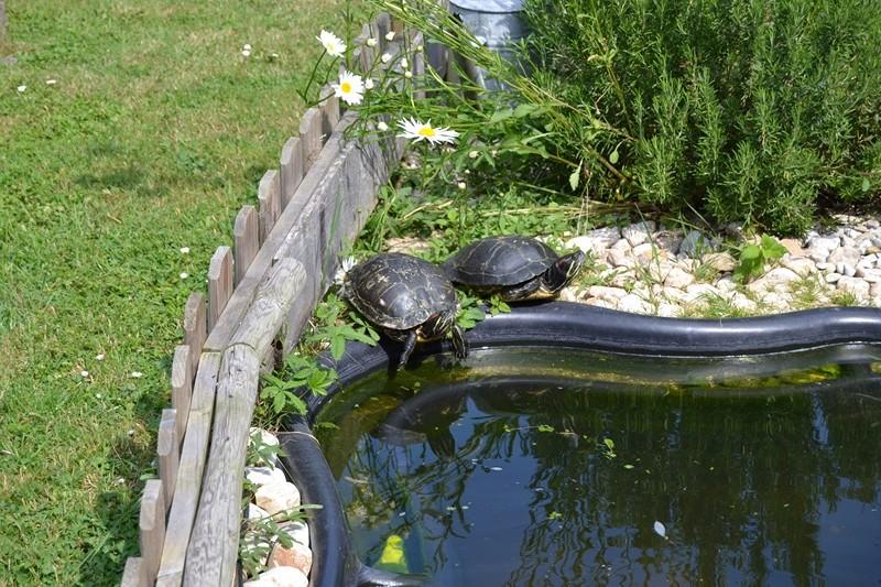 Notre petite faune au jardin.... 035_8013