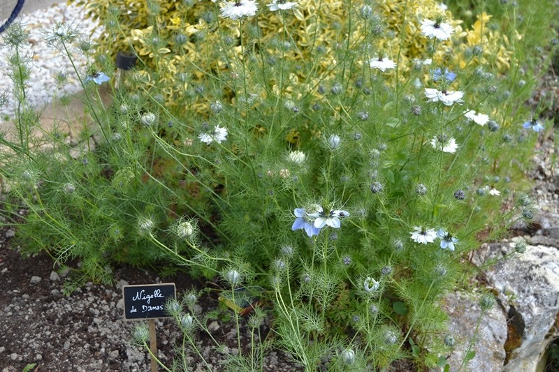 Les plantes toxiques. 074_8010