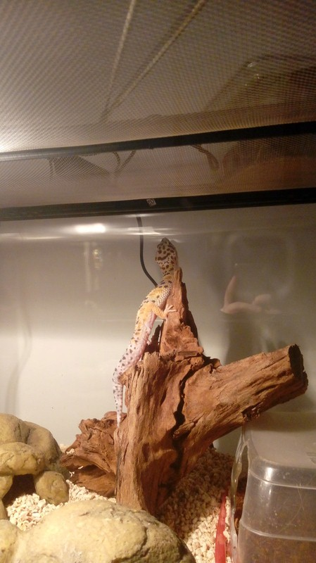 Aide gecko leopard  - Page 2 20180212