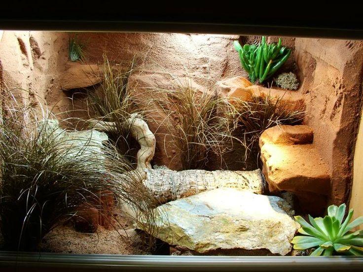 Aide gecko leopard  2f5ab410
