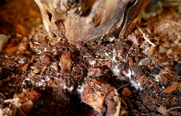 Mes champignons de terrarium Champi13