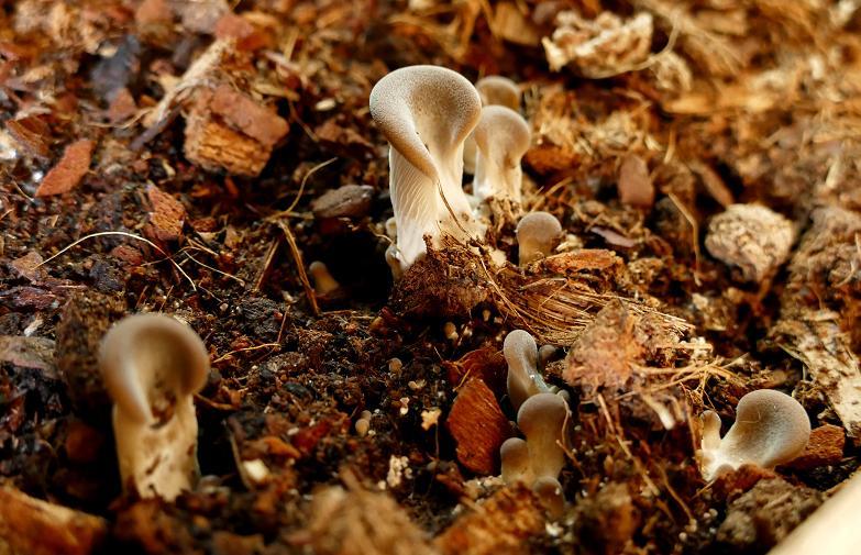 Mes champignons de terrarium Champi14