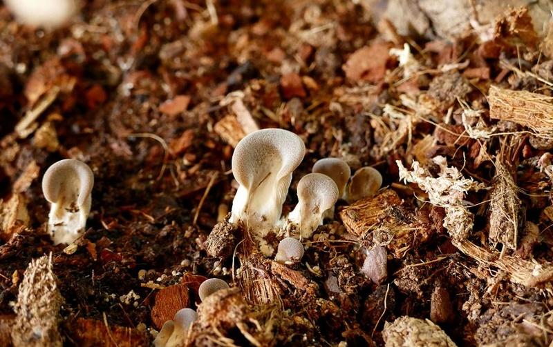 Mes champignons de terrarium Champi15