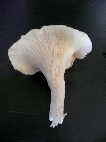 Mes champignons de terrarium Champi16