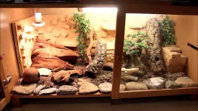 Aide gecko leopard  Maxres10