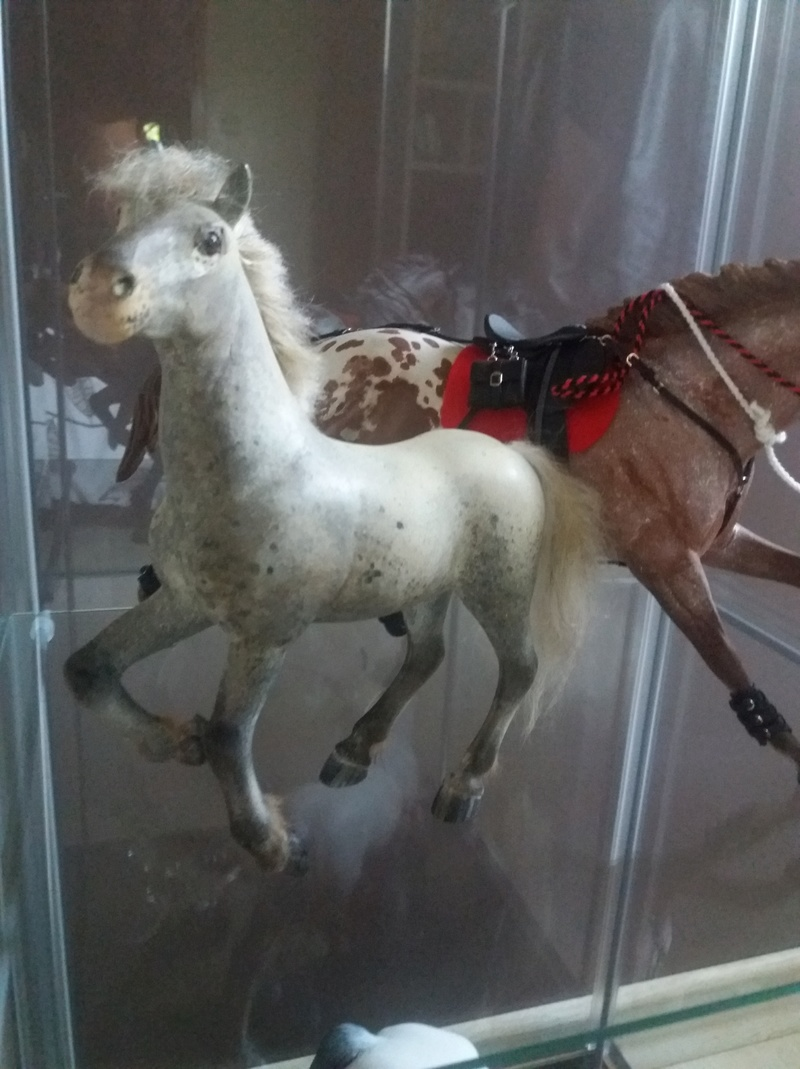 les chevaux de l'écurie Du vieux porche, bienvenue dans ce refuge miniature - Page 10 20180518