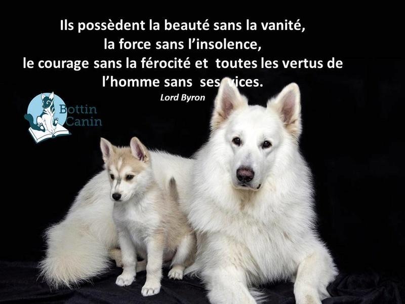 Salon de l'éducation canine et du bien-être animal - Rennes (35) - 22 avril 2018  22851810