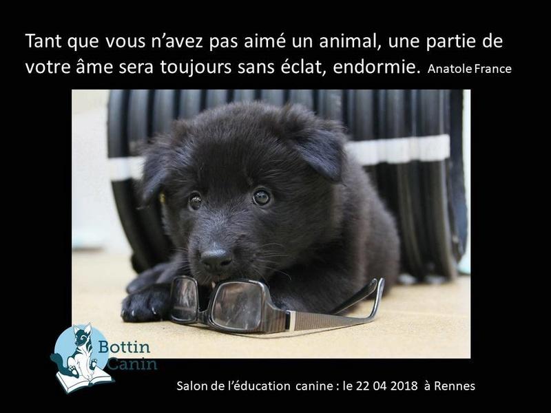 Salon de l'éducation canine et du bien-être animal - Rennes (35) - 22 avril 2018  23031410