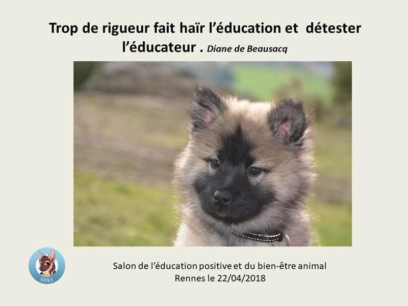 Salon de l'éducation canine et du bien-être animal - Rennes (35) - 22 avril 2018  23231410