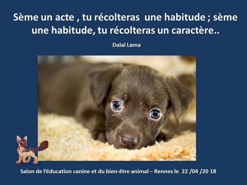 Salon de l'éducation canine et du bien-être animal - Rennes (35) - 22 avril 2018  23319210
