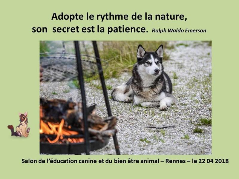 Salon de l'éducation canine et du bien-être animal - Rennes (35) - 22 avril 2018  23519110